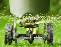 Fertilization Services